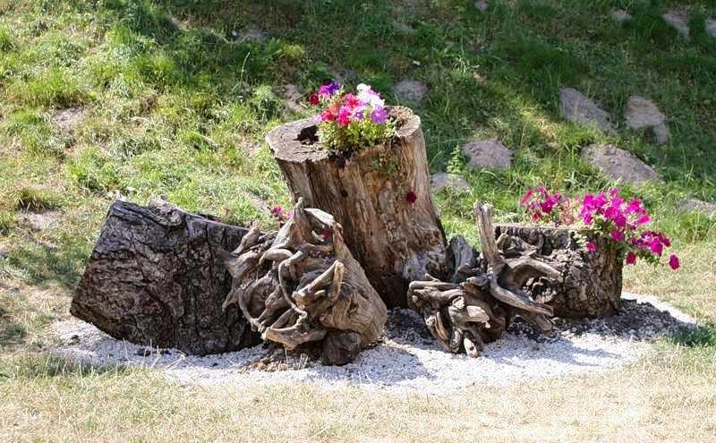 Коряги в садовом дизайне