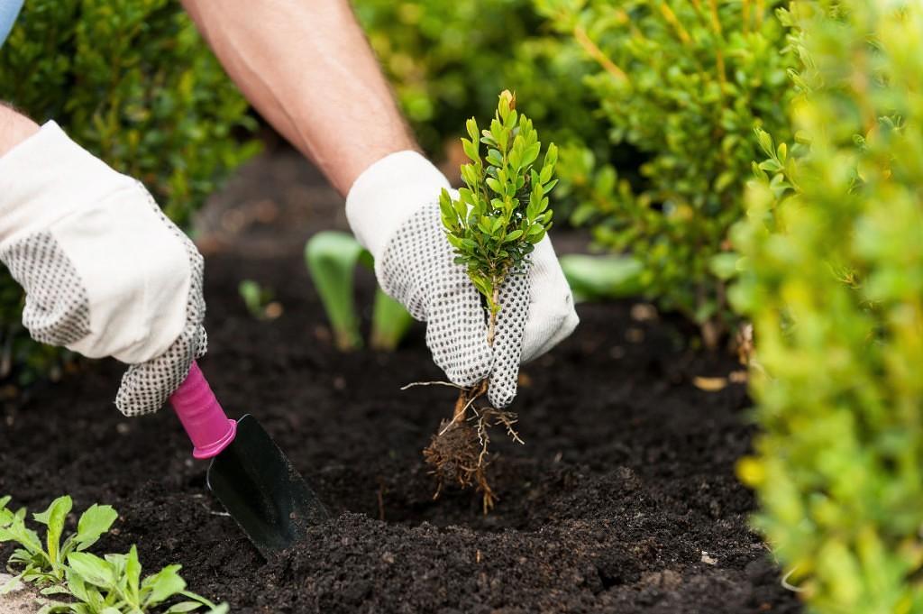 картинка сажать сад сразу